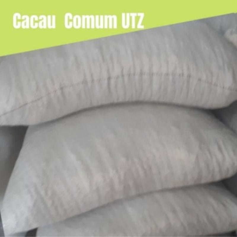 Cacau Comum (convencional) padrão UTZ - 25 Sacas