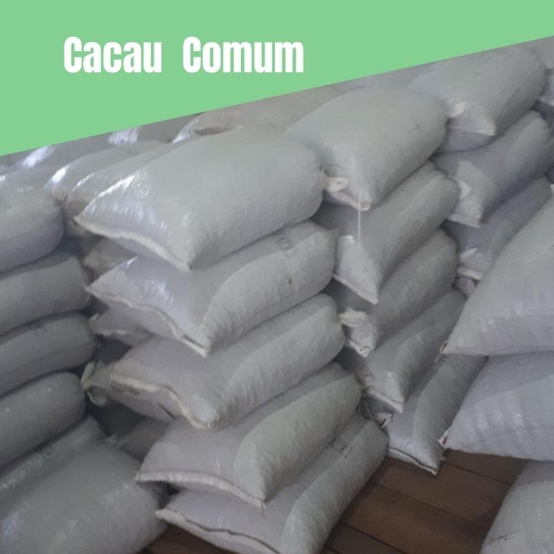Cacau Comum (Convencional) - Tipo 1 - 2 Arrobas
