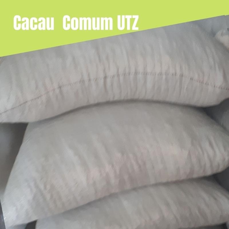 Cacau Comum (convencional) padrão UTZ - 24 Sacas